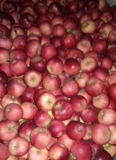 Nos pommes - Les vergers de la Caunelaye